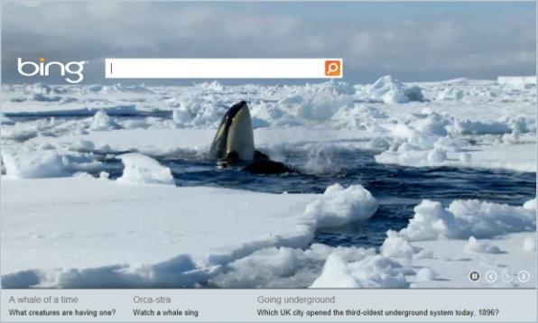 Watch these Orcas dive in the frozen water. Image MSN