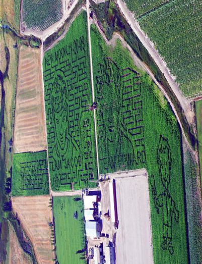 Corn field mazes
